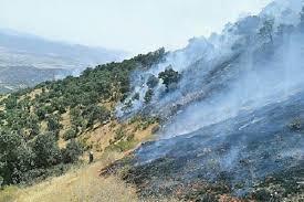 آتشسوزی جنگلها اتفاقی نیست