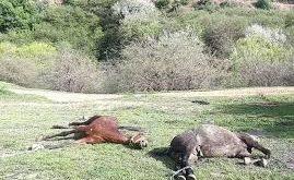 کشتن ٣ اسب کولبران و به غارت بردن ١۶ اسب دیگر توسط نیروهای رژیم در اورامانات